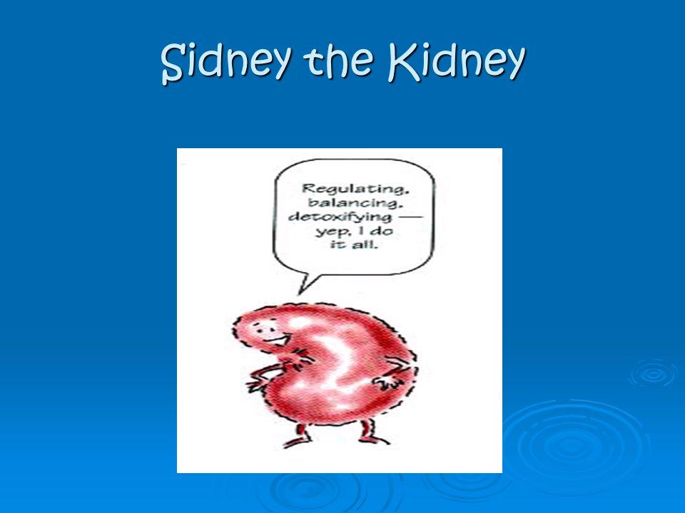 Sidney the Kidney