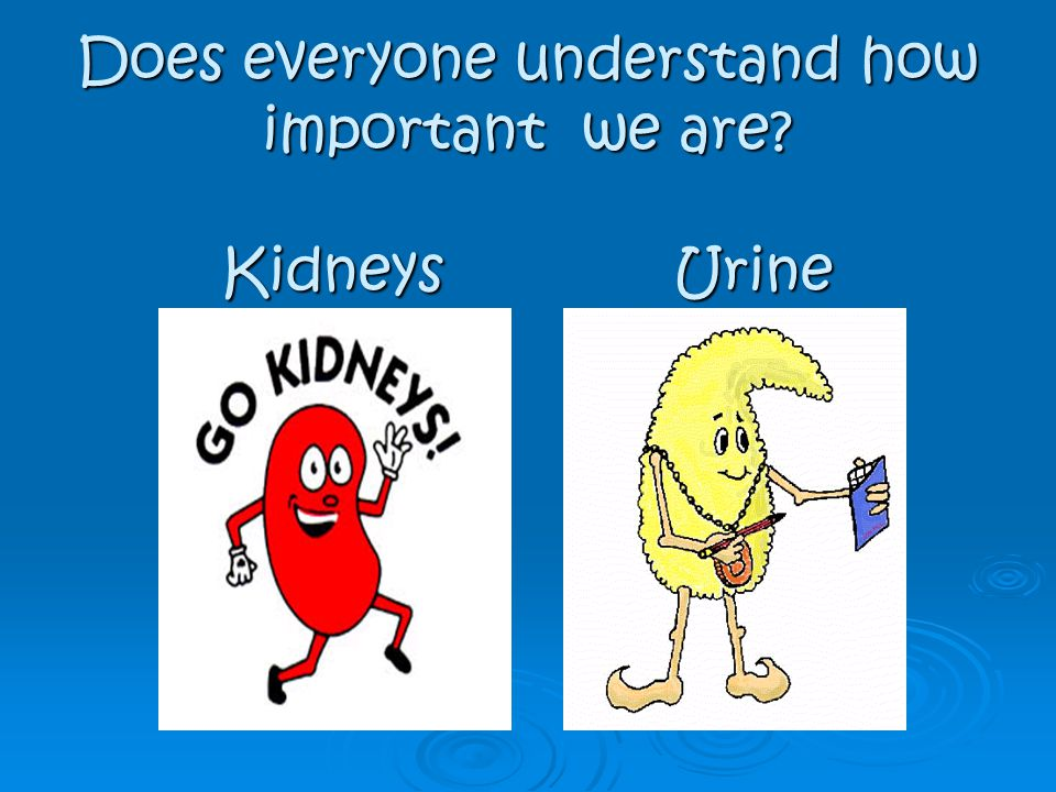 Does everyone understand how important we are Kidneys Urine