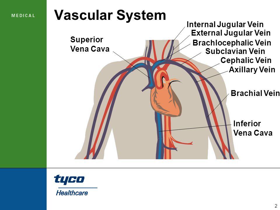 Vascular System Internal Jugular Vein External Jugular Vein