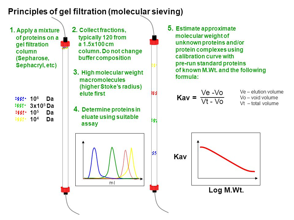 Principles of gel filtration (molecular sieving)