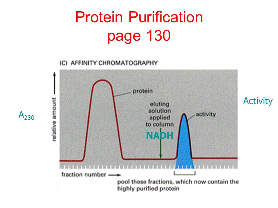 Protein purification lab essay