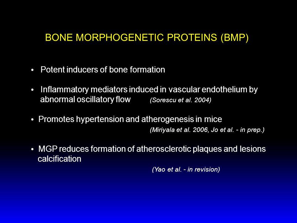 BONE MORPHOGENETIC PROTEINS (BMP)
