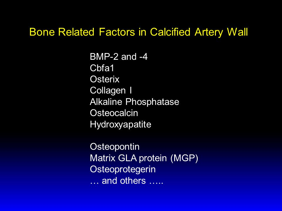 Bone Related Factors in Calcified Artery Wall