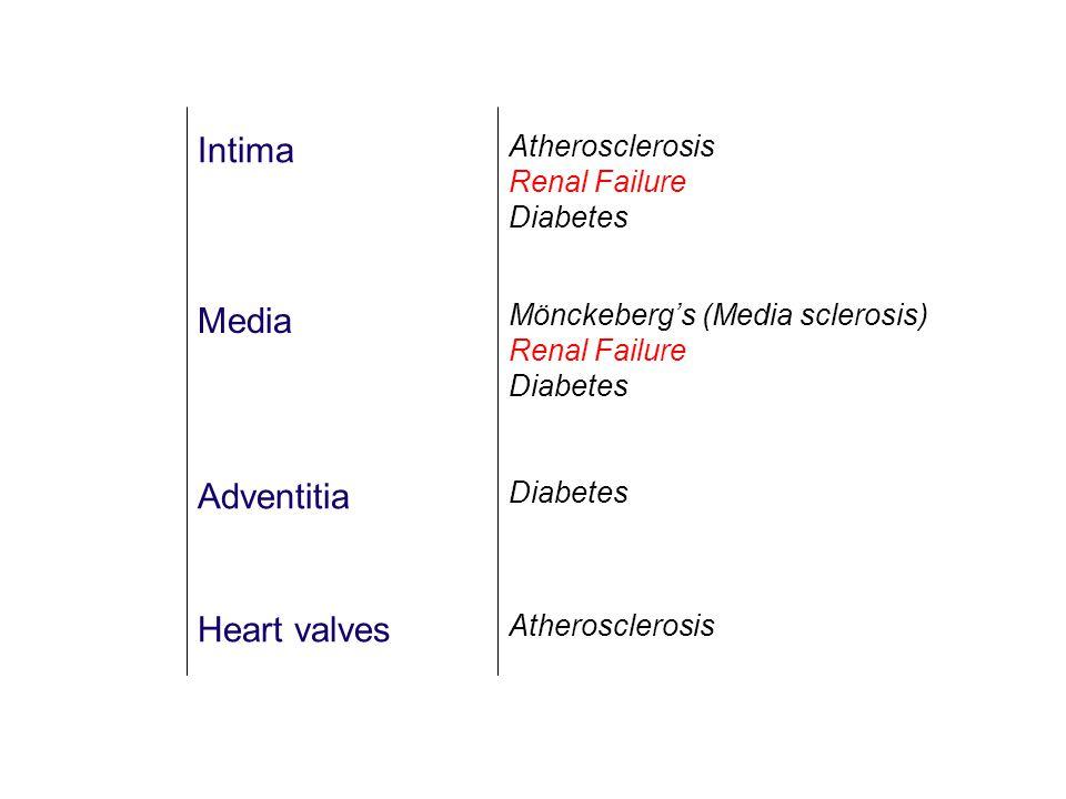 Intima Media Adventitia Heart valves Atherosclerosis Renal Failure