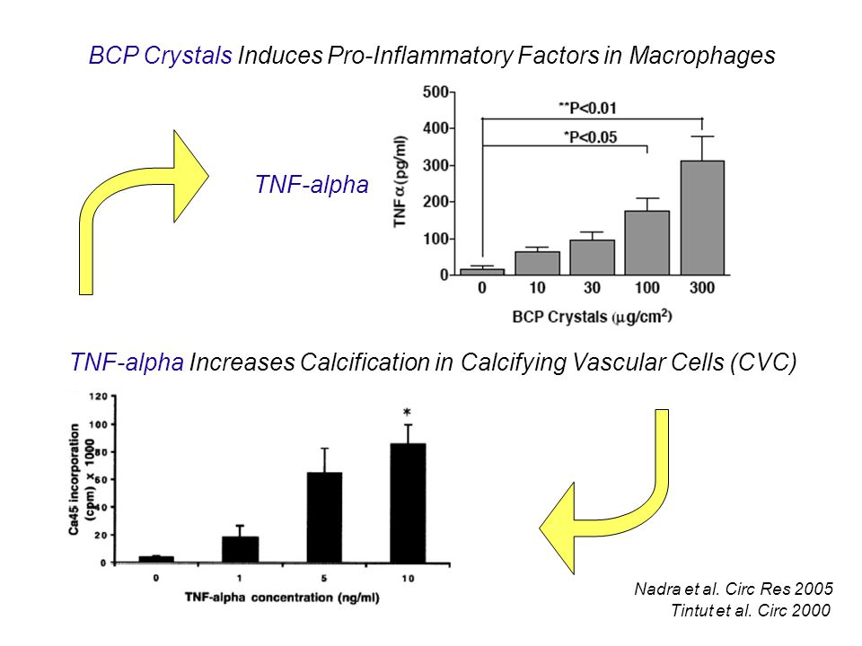 BCP Crystals Induces Pro-Inflammatory Factors in Macrophages
