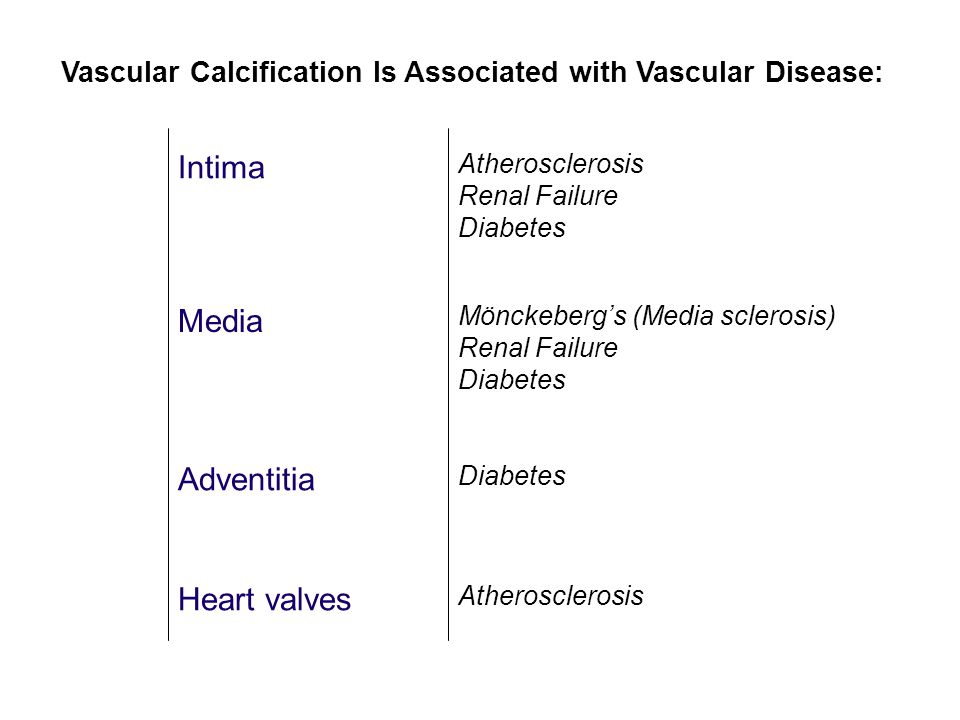 Intima Media Adventitia Heart valves