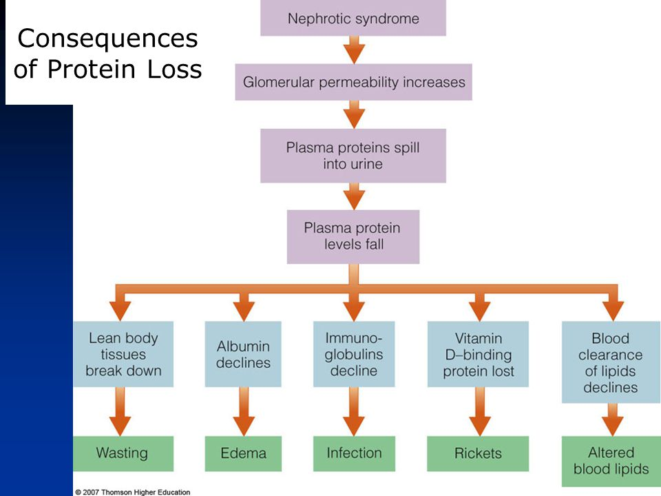 Consequences of Protein Loss