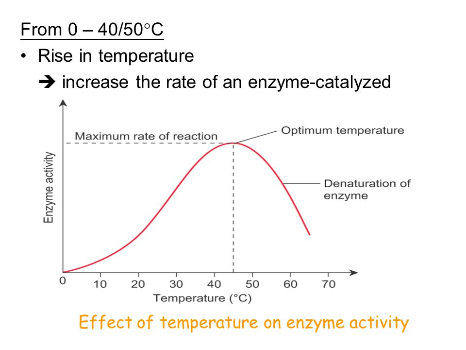 enzyme reaction rates under different conditions As temperature increases, the rate of the enzyme catalyzed reaction also increases because the molecules are moving faster and colliding more frequently after a certain temperature, the reaction rate decreases because the heat starts to denature the enzyme so that it no longer can function  no different enzymes have different ideal.