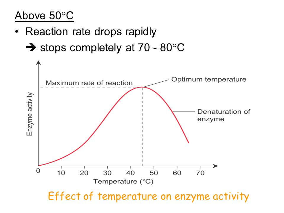 Reaction rate drops rapidly  stops completely at 70 - 80C