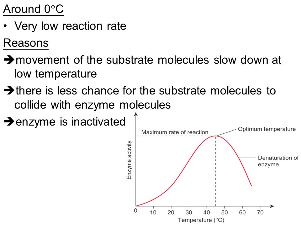 Around 0C Very low reaction rate. Reasons. movement of the substrate molecules slow down at low temperature.