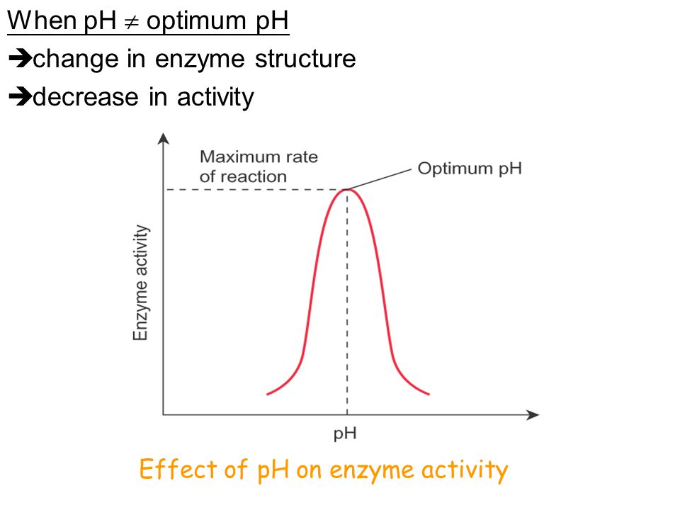 change in enzyme structure decrease in activity