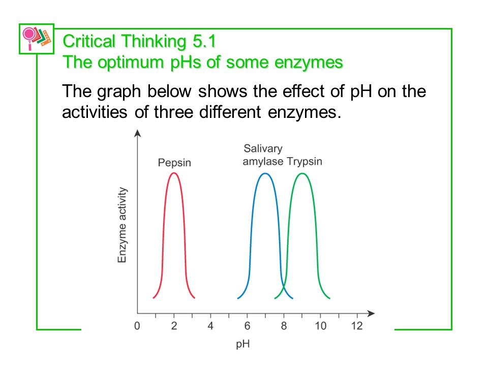 Critical Thinking 5.1 The optimum pHs of some enzymes