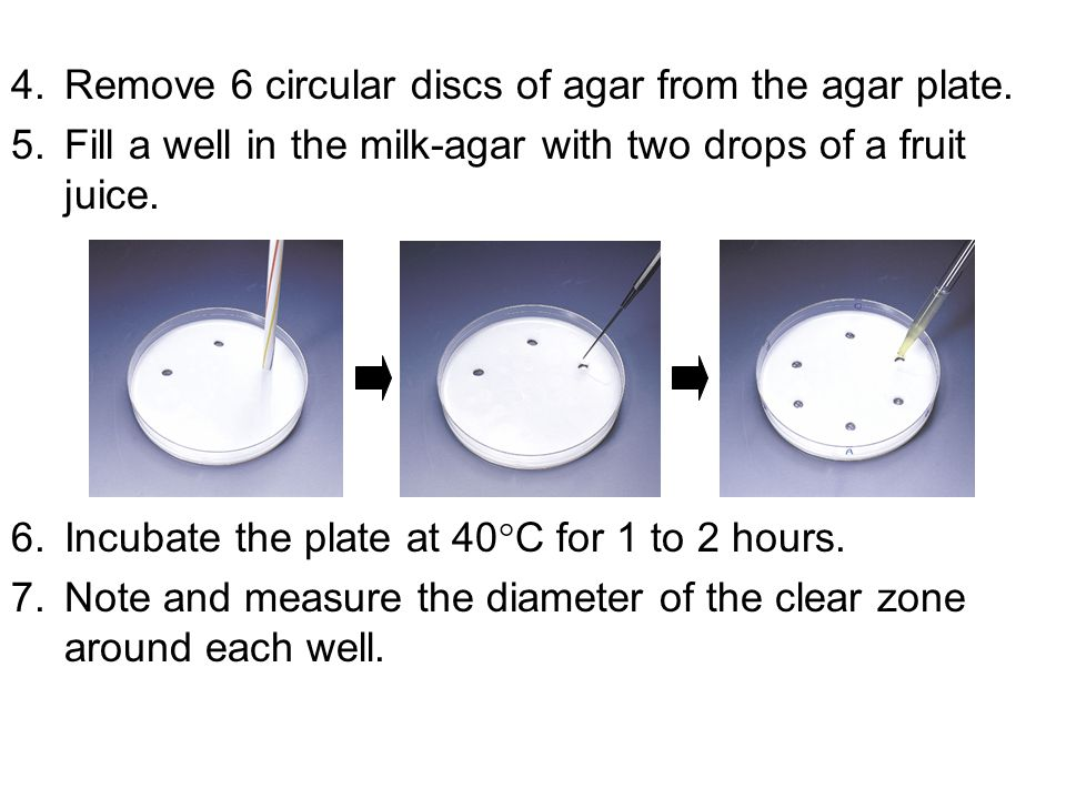 Remove 6 circular discs of agar from the agar plate.