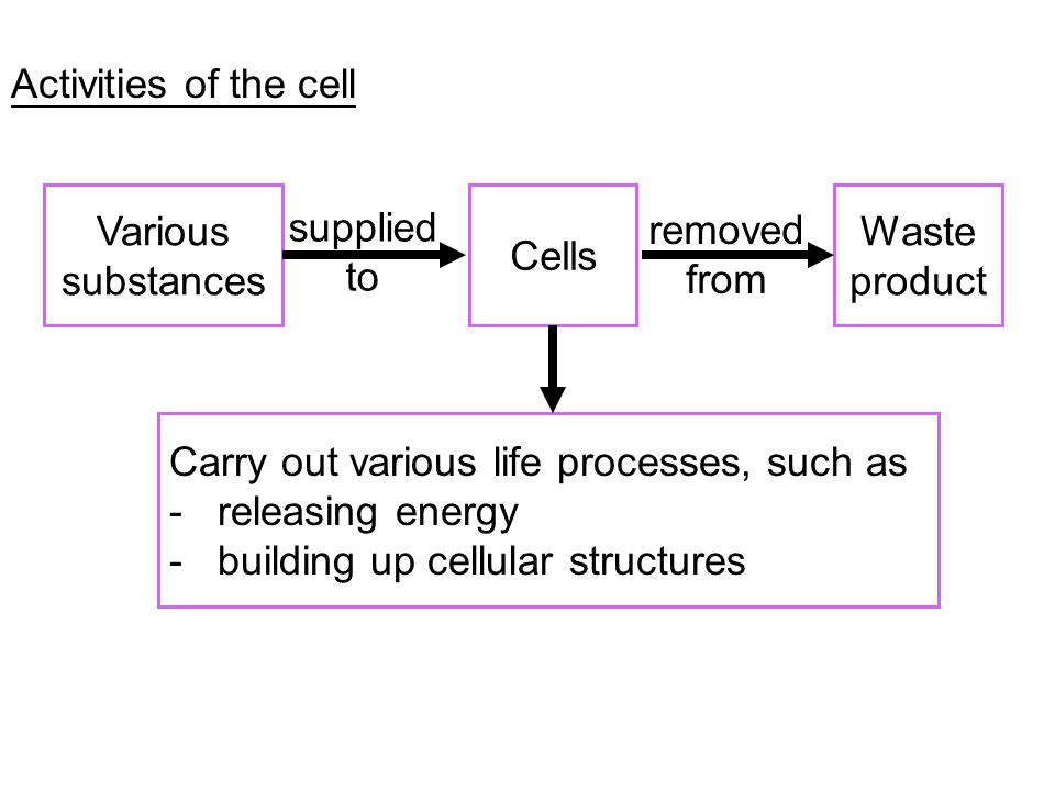 Activities of the cell Various substances. Cells. Waste product. Carry out various life processes, such as.
