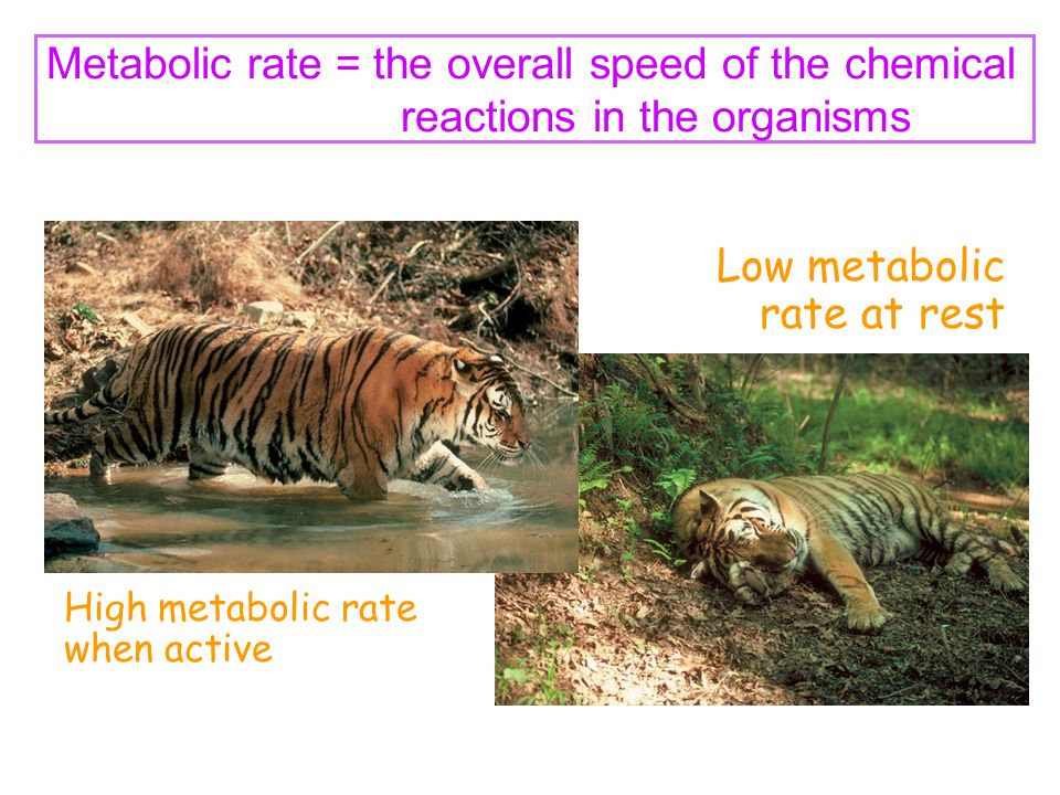 Low metabolic rate at rest