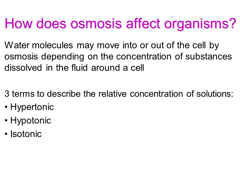 How does osmosis affect organisms