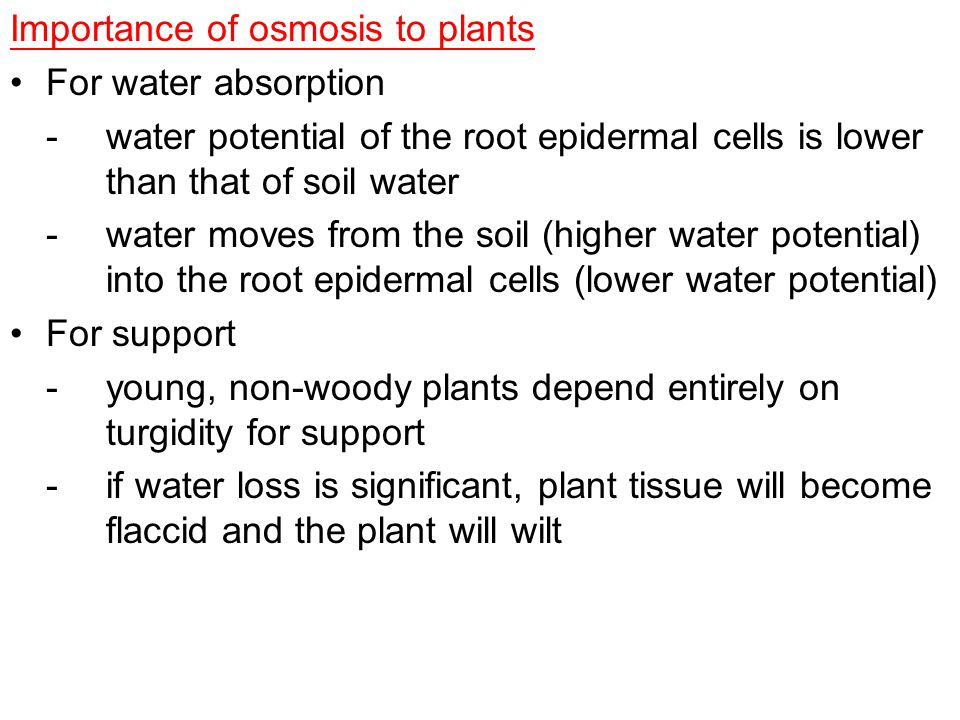 Importance of osmosis to plants