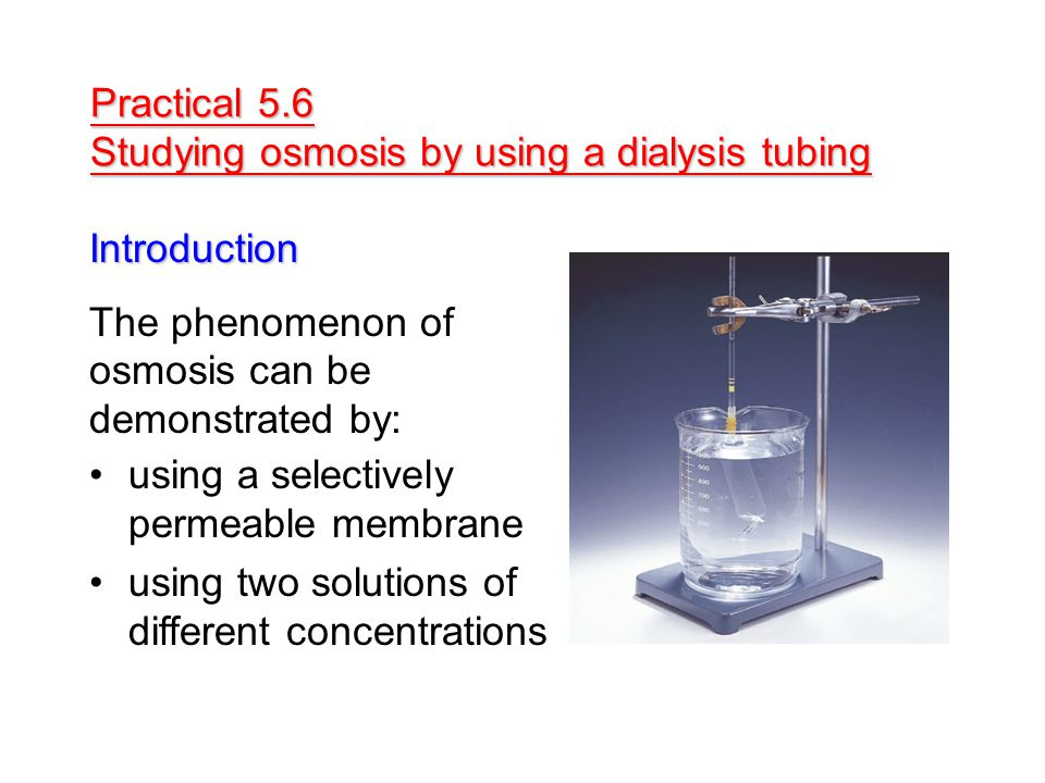 Practical 5.6 Studying osmosis by using a dialysis tubing