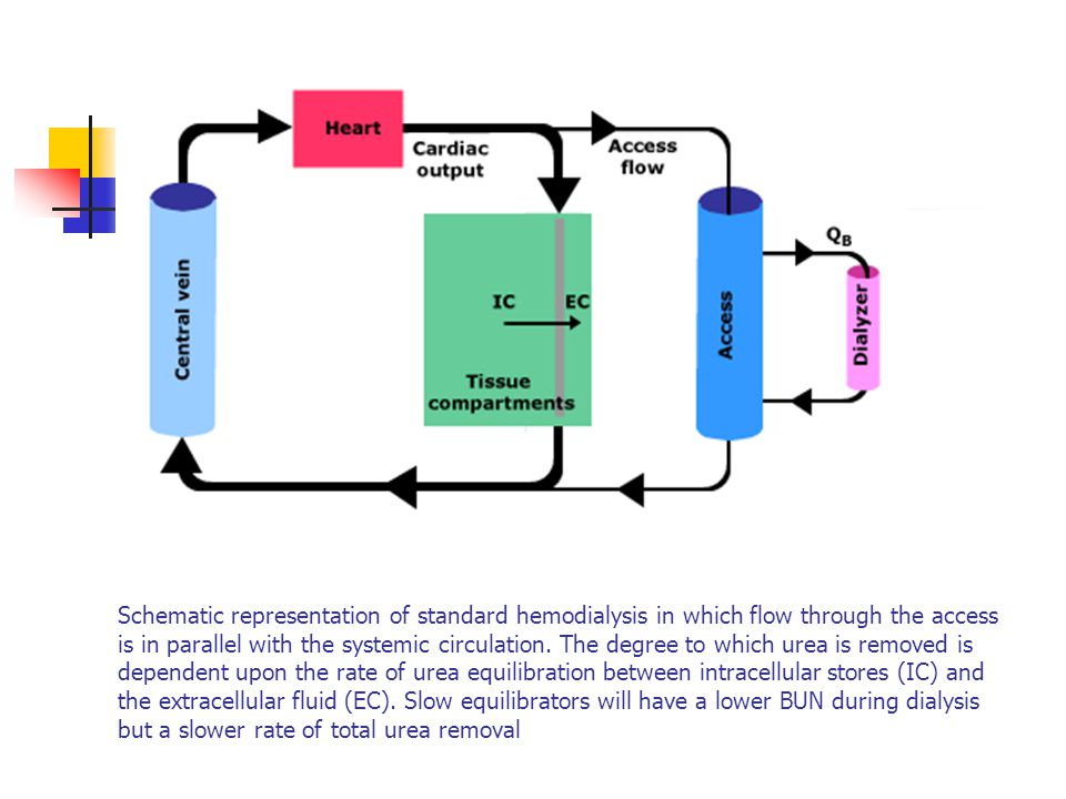 Schematic representation of standard hemodialysis in which flow through the access is in parallel with the systemic circulation.