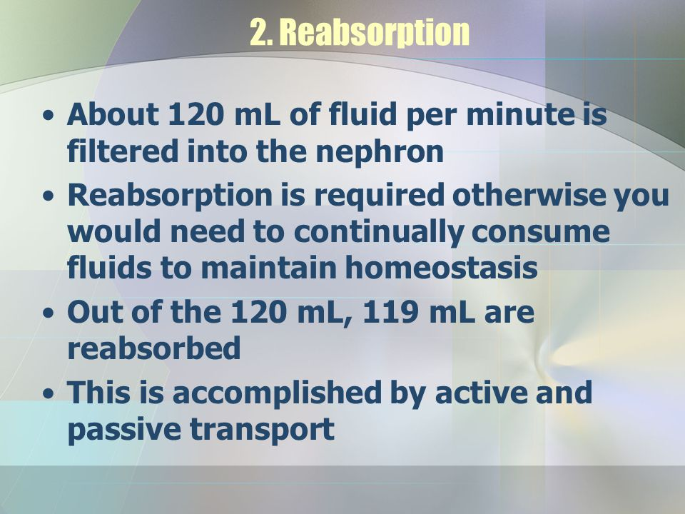2. Reabsorption About 120 mL of fluid per minute is filtered into the nephron.