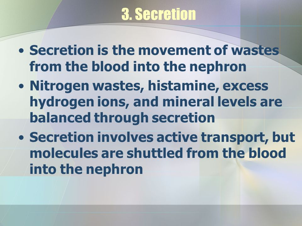 3. Secretion Secretion is the movement of wastes from the blood into the nephron.