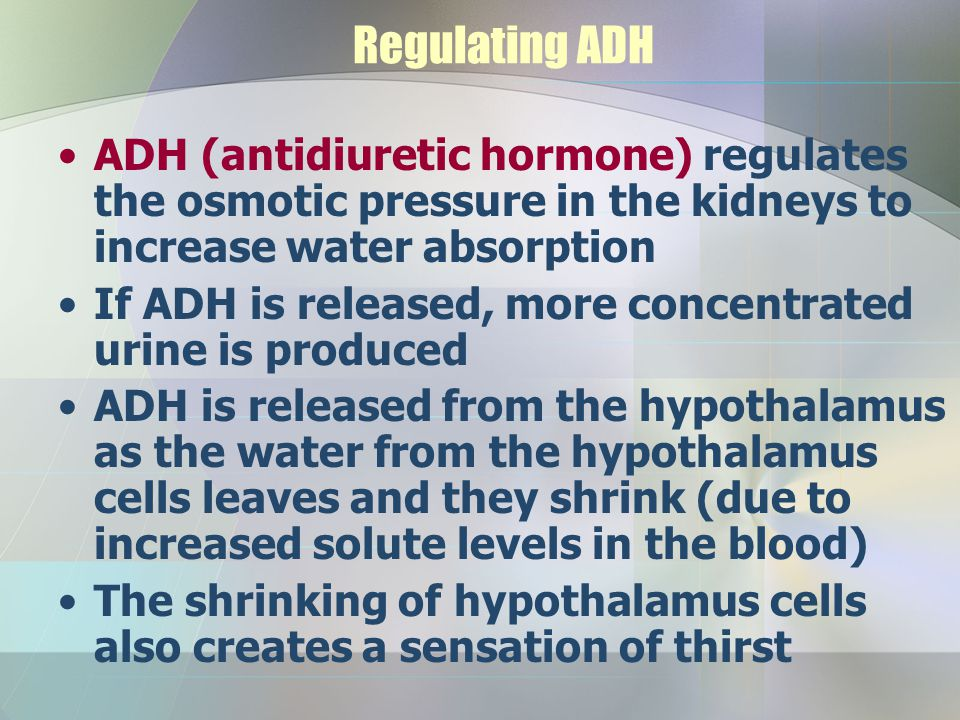 Regulating ADH ADH (antidiuretic hormone) regulates the osmotic pressure in the kidneys to increase water absorption.