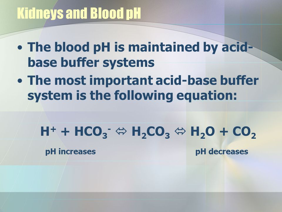 Kidneys and Blood pH The blood pH is maintained by acid-base buffer systems. The most important acid-base buffer system is the following equation: