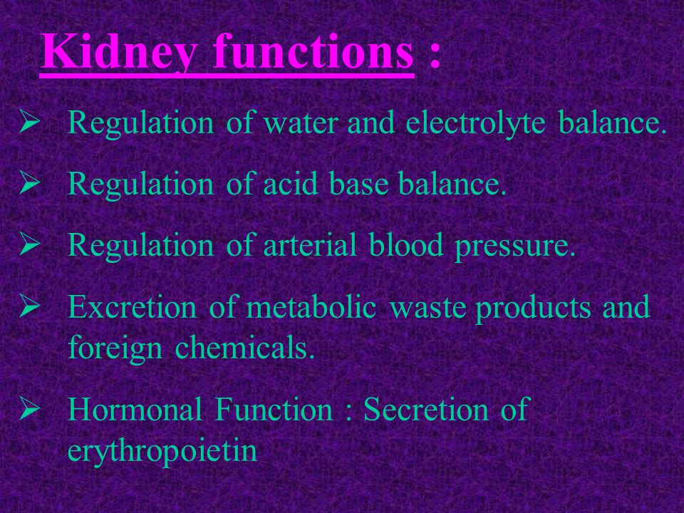 Regulation of water and electrolyte balance.