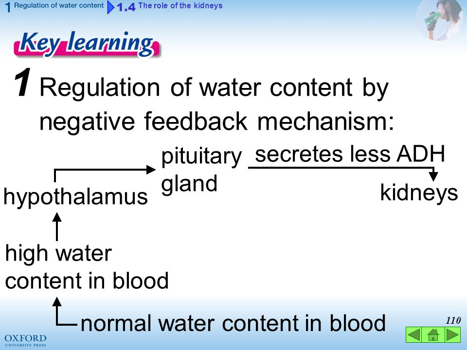 normal water content in blood