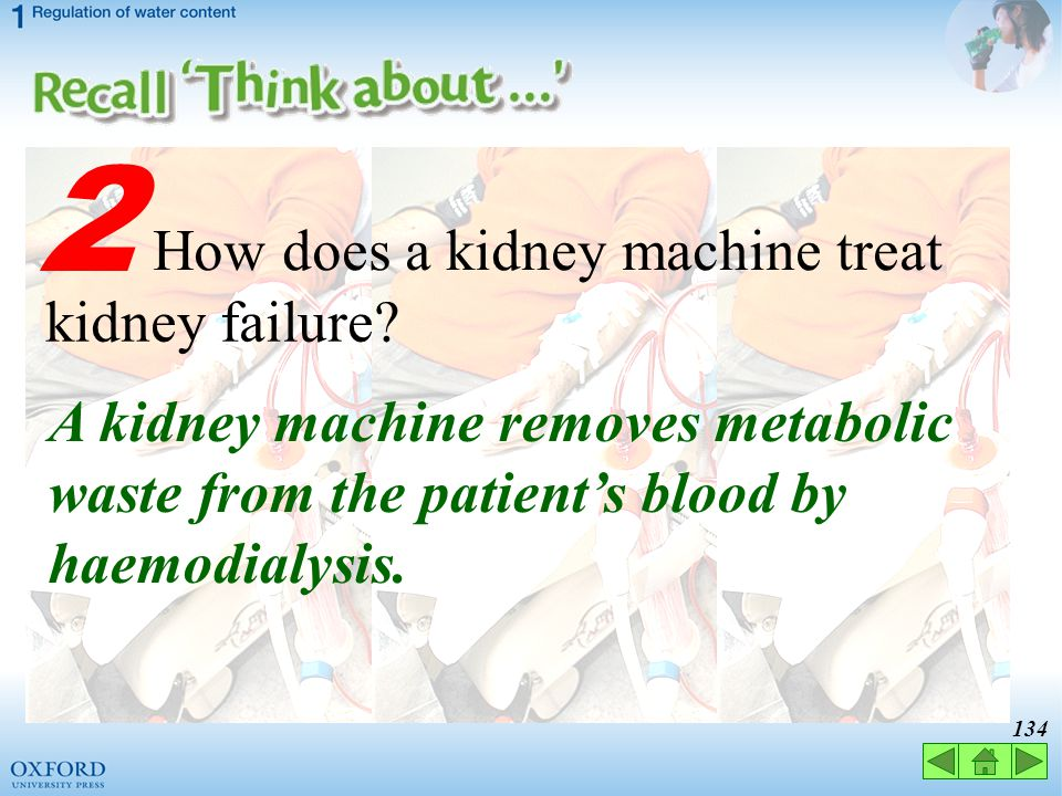 2 How does a kidney machine treat kidney failure