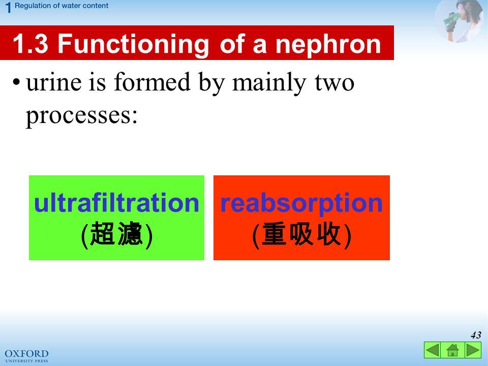 ultrafiltration reabsorption