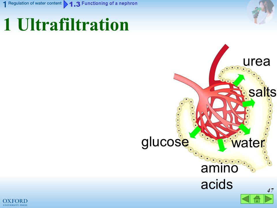 1 Ultrafiltration urea salts glucose water amino acids 1.3