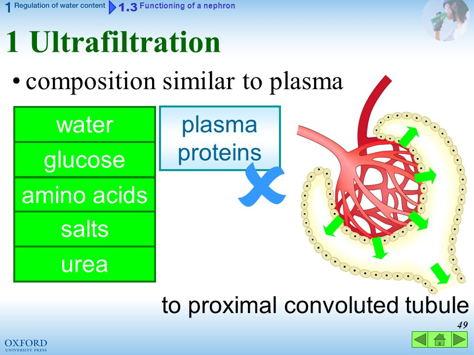  1 Ultrafiltration composition similar to plasma water