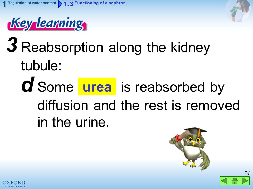 3 Reabsorption along the kidney tubule:
