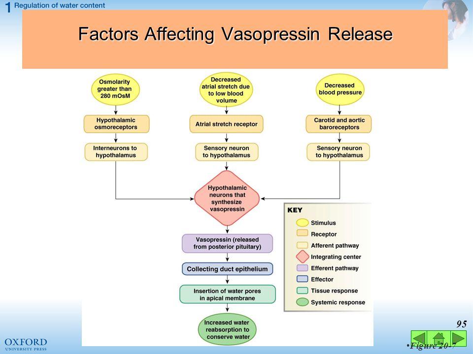 Factors Affecting Vasopressin Release