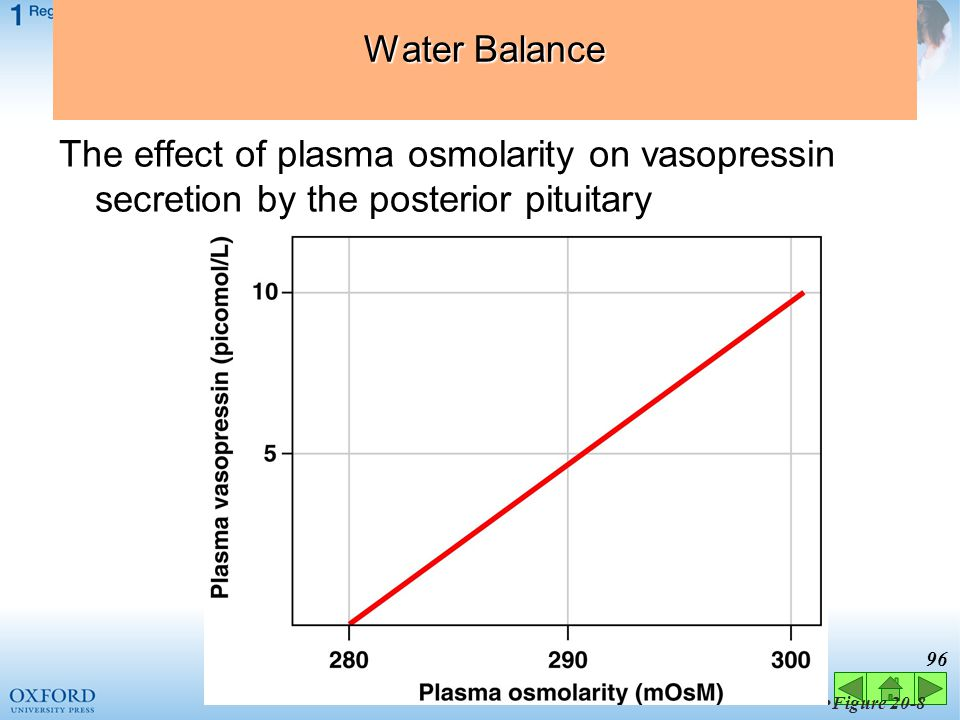 Water Balance The effect of plasma osmolarity on vasopressin secretion by the posterior pituitary. Figure 20-8.
