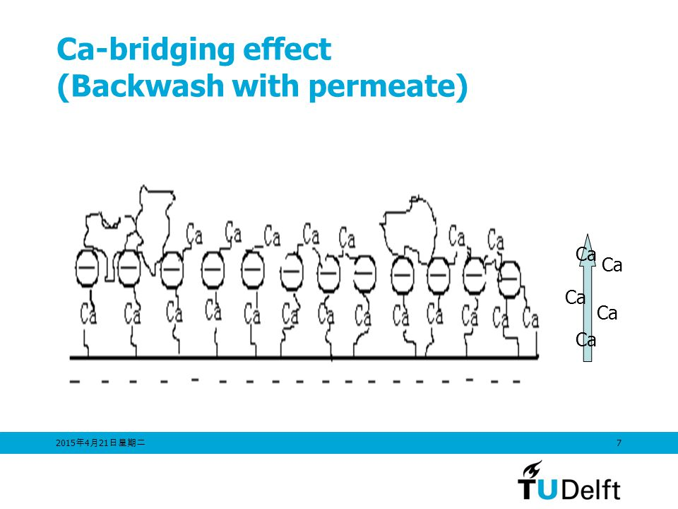 Ca-bridging effect (Backwash with permeate)