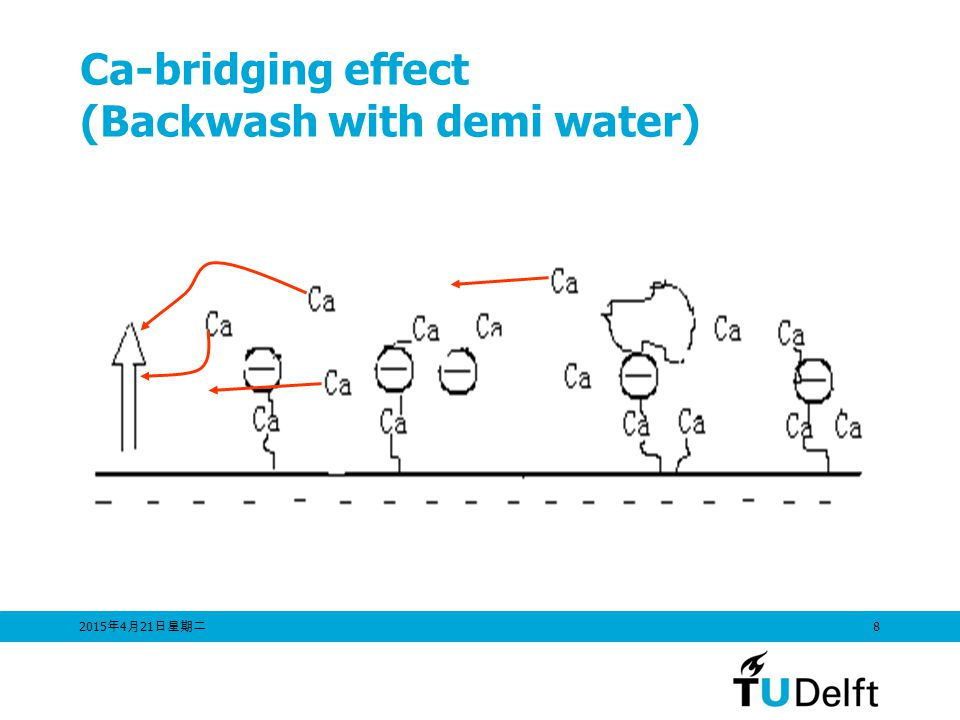 Ca-bridging effect (Backwash with demi water)