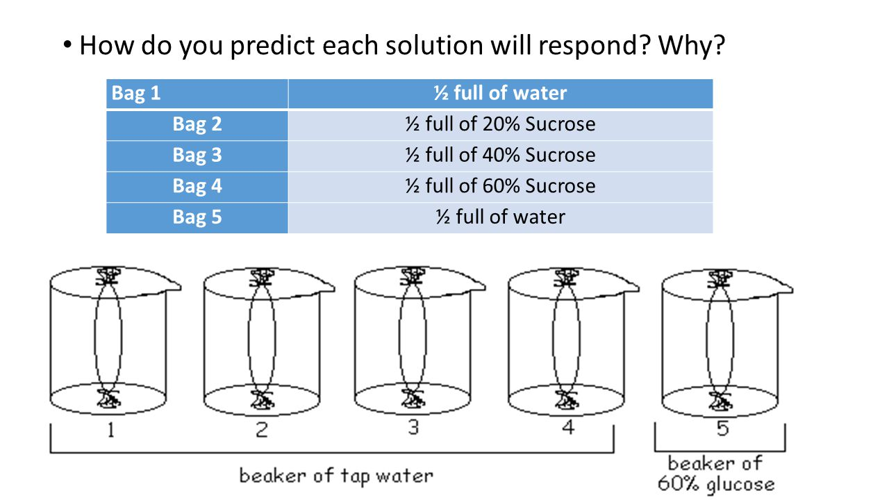 How do you predict each solution will respond Why
