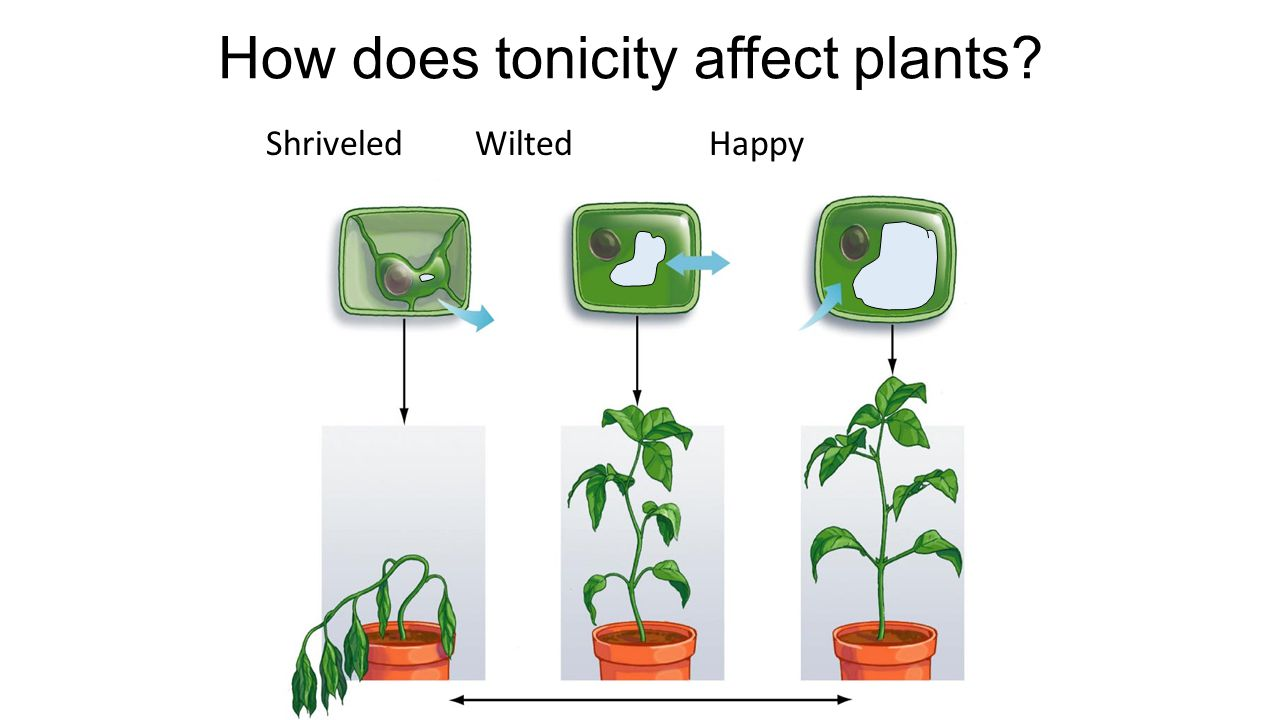 How does tonicity affect plants