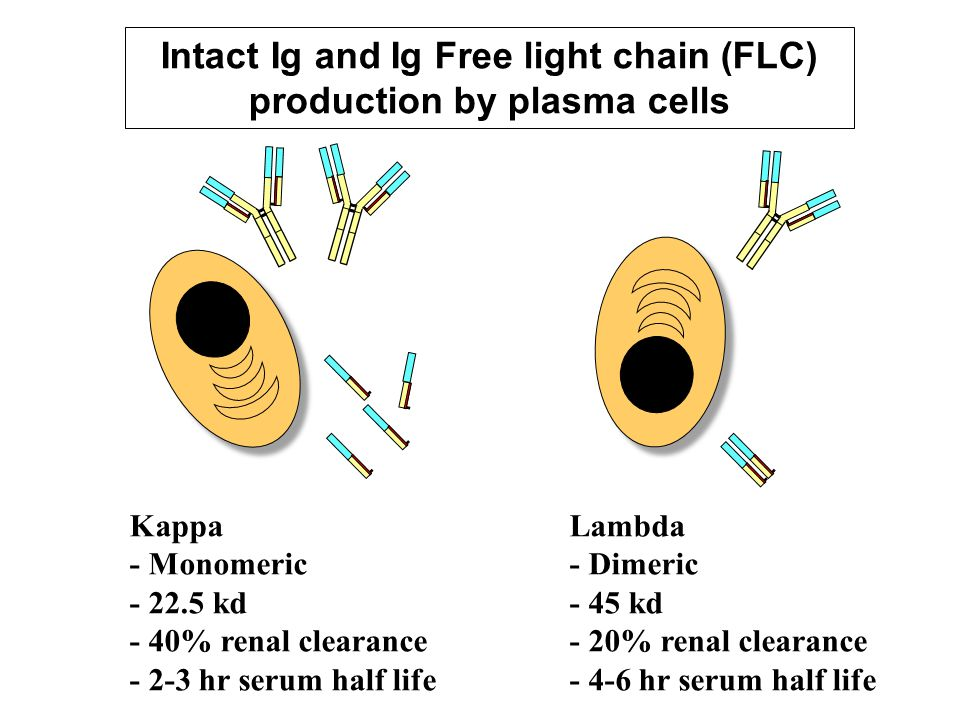 Intact Ig and Ig Free light chain (FLC) production by plasma cells