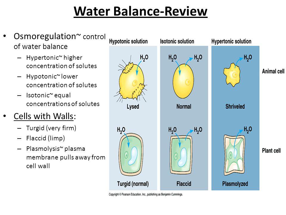 Water Balance-Review Osmoregulation~ control of water balance