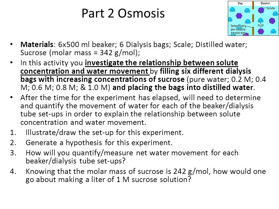 Part 2 Osmosis Materials: 6x500 ml beaker; 6 Dialysis bags; Scale; Distilled water; Sucrose (molar mass = 342 g/mol);