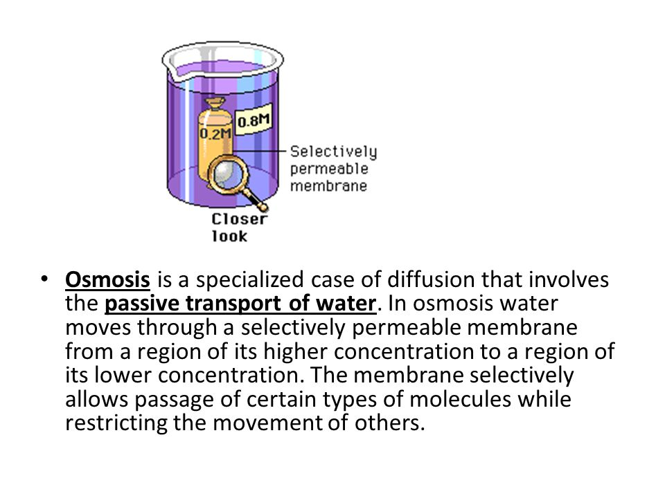 Osmosis is a specialized case of diffusion that involves the passive transport of water.
