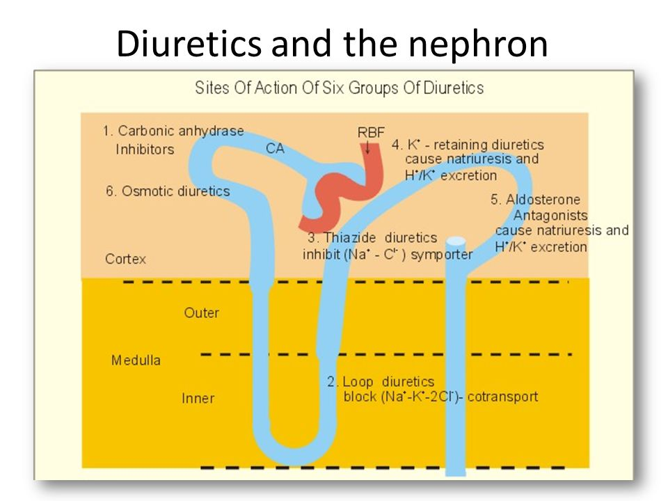 Diuretics and the nephron