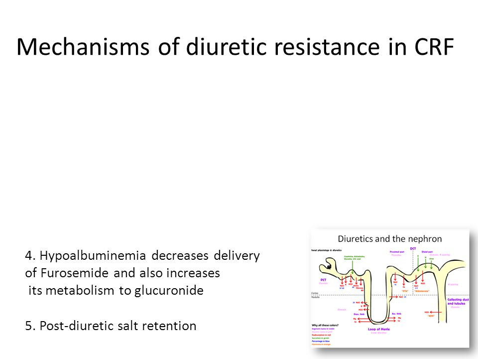 Mechanisms of diuretic resistance in CRF