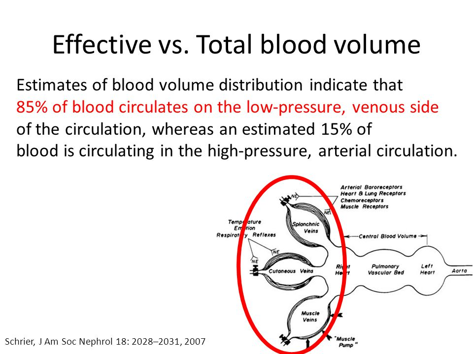 Effective vs. Total blood volume