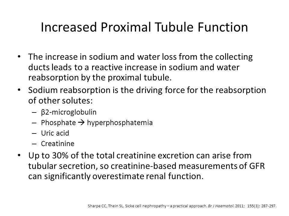 Increased Proximal Tubule Function