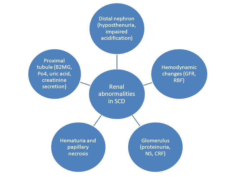Renal abnormalities in SCD