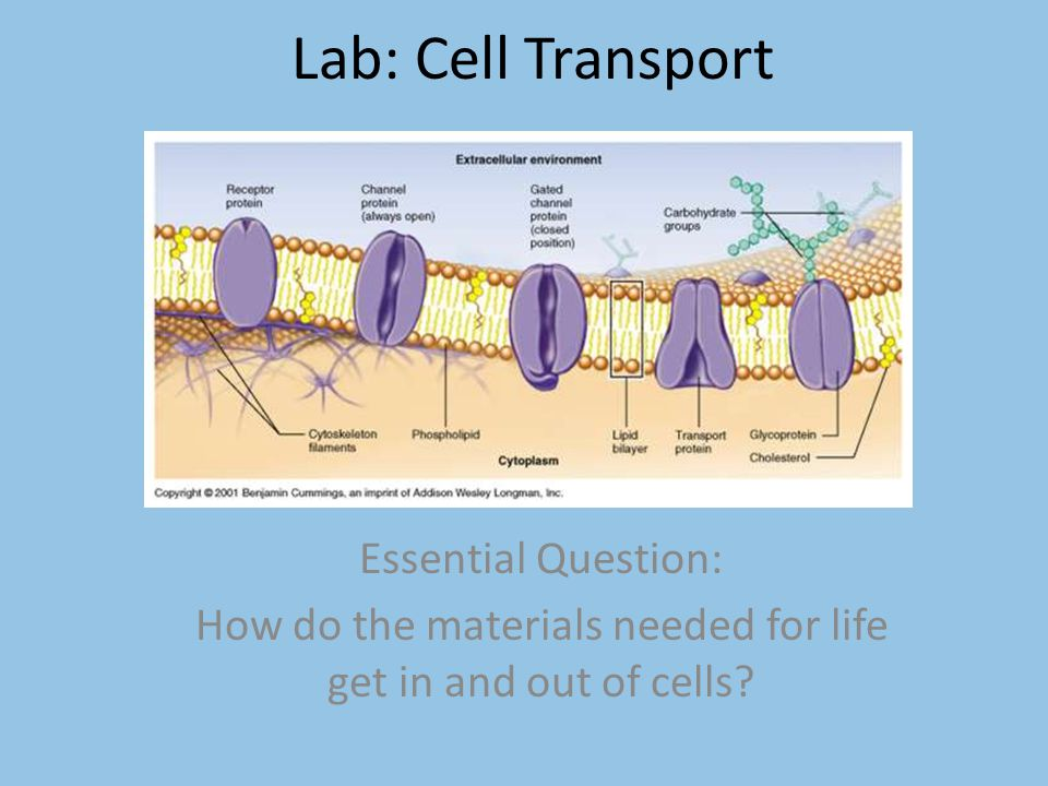 How do the materials needed for life get in and out of cells